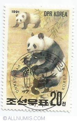 Image #1 of 20 Chon - Panda