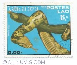Image #1 of 5 kip - Python molurus