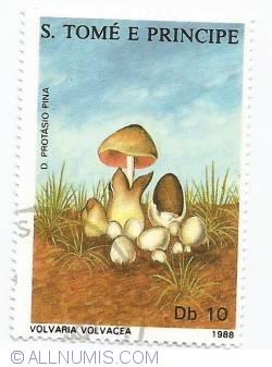 Image #1 of 10 Dobras - Volvaria volvacea