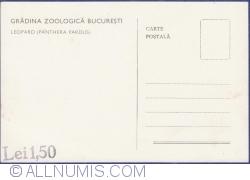 Image #2 of Leopard (Panthera Pardus)