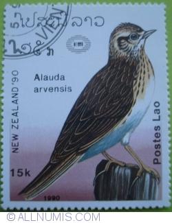 Image #1 of 15 Kip 1990 - Alauda arvensis