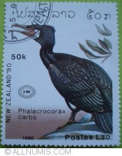 Image #1 of 50 Kip 1990 - Phalacrocorax carbo