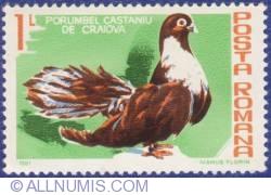 1 Leu - Porumbel castaniu de Craiova
