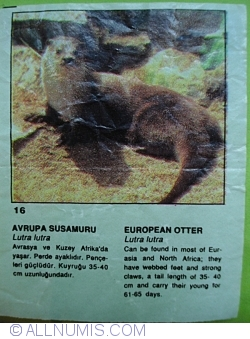 Image #1 of 16 - European Otter (Lutra lutra)