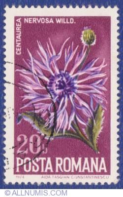 20 Bani - Centaurea Nervosa