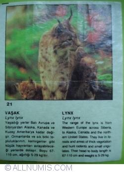 Image #1 of 21 - Lynx (lynx lynx)