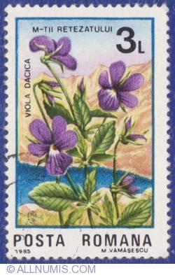 3 Lei 1985 - Viola dacica