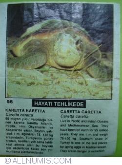 56 - Caretta caretta (caretta caretta)