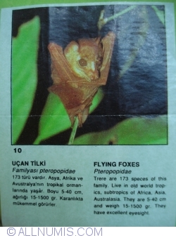 10 - Flying Foxes (Pteropopidae)