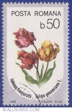 50 Bani - Laleaua franjurată (Tulipa gesneriana L.)
