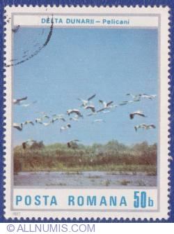 50 Bani - Danube Delta - Pelicans
