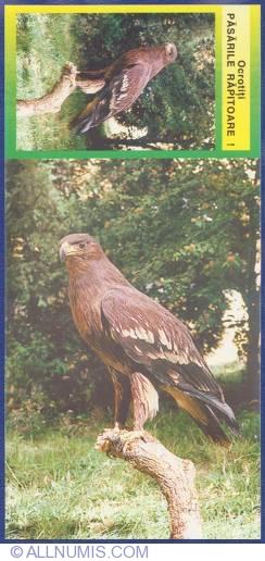Image #1 of Aquila clanga Pall 1891 - Acvilă ţipătore mare (Din colecţia Dionisie Liniţa - Muzeul Banatului - Timişoara)