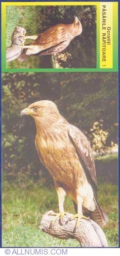 Image #1 of Aquila pomarina C.L. Brehm 1831 -  Acvilă ţipătoare mică  (Din colecţia Dionisie Liniţa - Muzeul Banatului Timişoara)