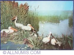 "Image #1 of The Diorama ""The life in  Danube Delta"" - Natural History Museum - Grigore Antipa"