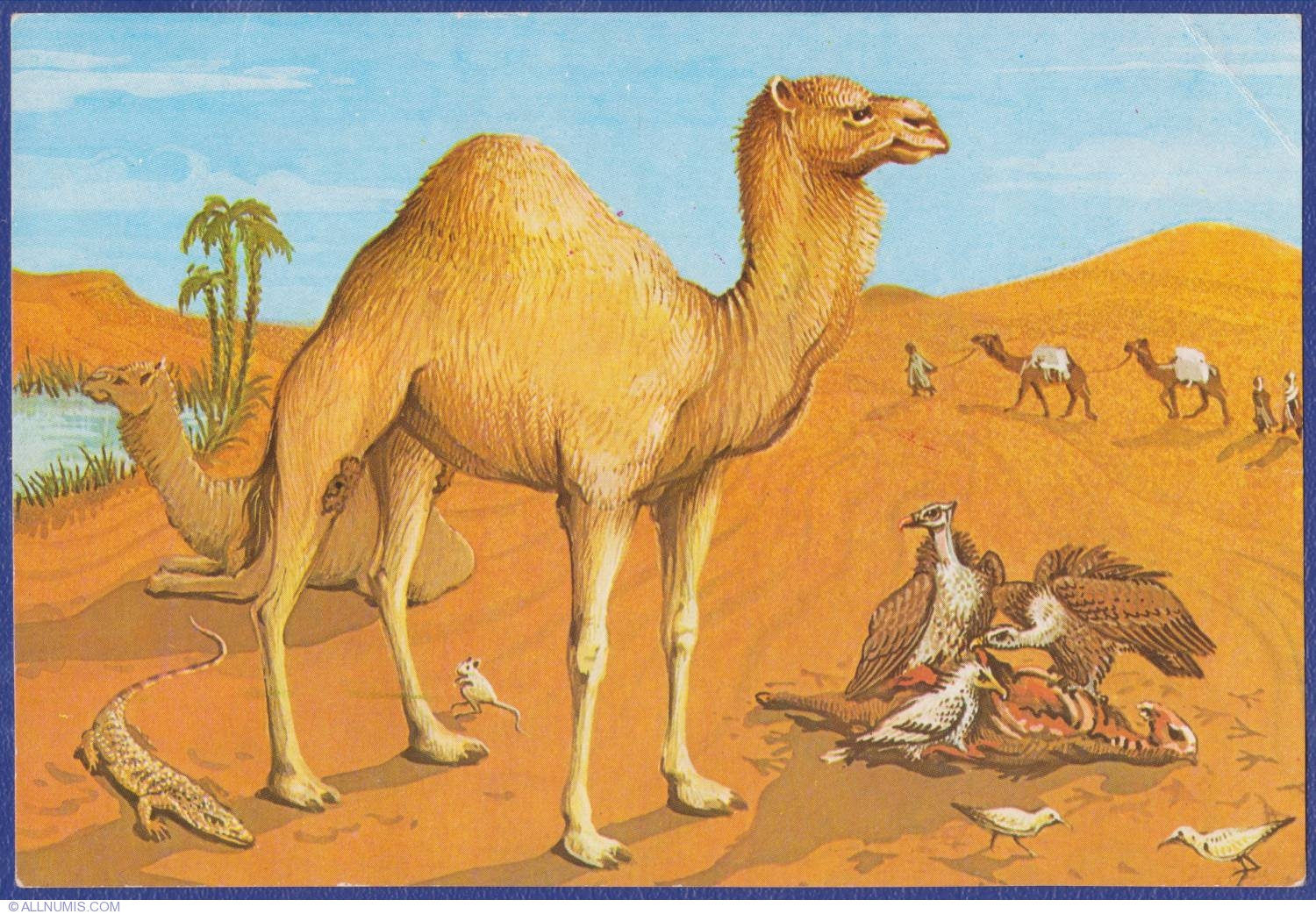 The Diorama - The life in Sahara desert - Natural History