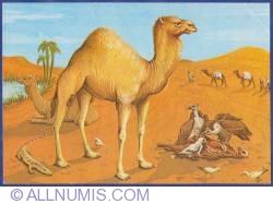 Image #1 of The Diorama - The life in Sahara desert  - Natural History Museum - Grigore Antipa