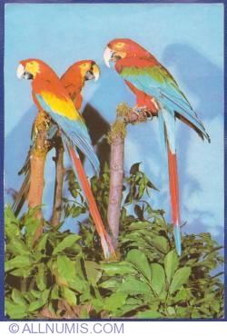 Image #1 of South American macaw (Ara macao, 2 copies; Ara chloroptera, 1 copy) - Natural History Museum Grigore Antipa