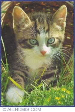 Imaginea #1 a Pisică