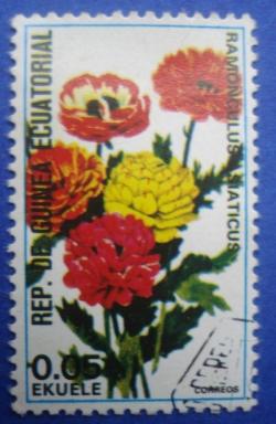 0.05 Ekuele - Ranunculus Asiaticus
