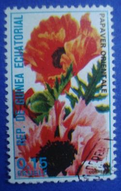 Image #1 of 0.15 Ekuele - Papaver Orientale