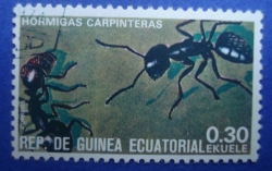 Image #1 of 0.30 Ekuele - Hormigas Carpinteras