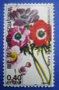 Image #1 of 0.40 Ekuele - Anemone Coronaria de Caen