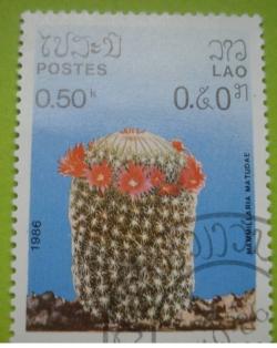 Image #1 of 0.50 Kip - mammillaria matudae