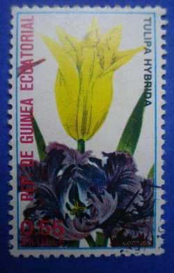 Image #1 of 0.55 Ekuele - Tulipa Hybrida