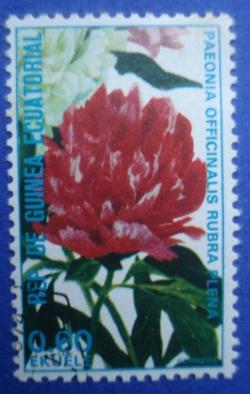 0.60 Ekuele - Paeonia Officinalis Rubra Plena