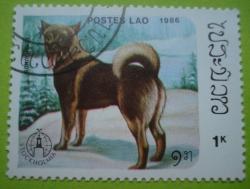 Image #1 of 1 Kip - elkhounds