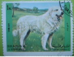 Image #1 of 1 RL - Dog