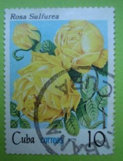 Image #1 of 10 Centavos - Rosa Sulfurea