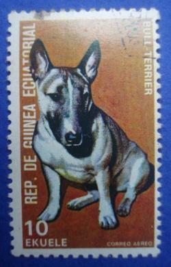 Image #1 of 10 Ekuele - Bull Terrier