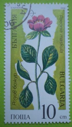 Image #1 of 10 Stotinki - Paeonia maskula