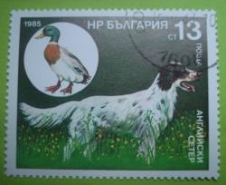 Image #1 of 13 Stotinki - English Setter and Duck