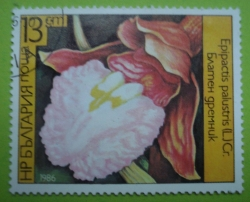 Imaginea #1 a 13 Stotinki - Epipactis palustris