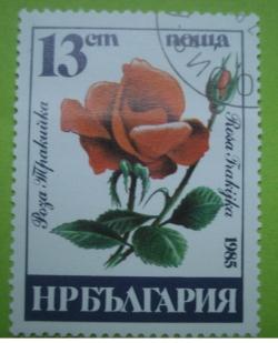 13 Stotinki - Rosa Trakijka
