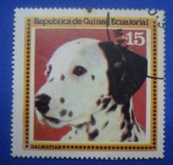 Image #1 of 15 Ekuele - Dalmatian