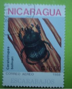 Image #1 of 16 Cordobas - ceratotrupes bolivari
