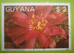 Image #1 of 2 Dollars - Lobivia polycephala
