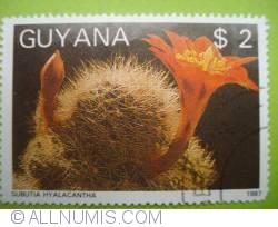 Image #1 of 2 Dollars - Subutia hyalacantha
