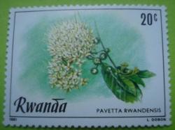 Image #1 of 20 Centimes - pavetta rwandensis