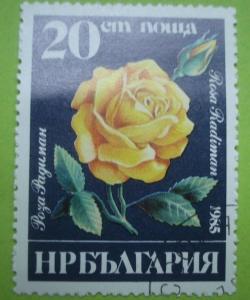 Imaginea #1 a 20 Stotinki - Rosa radiman