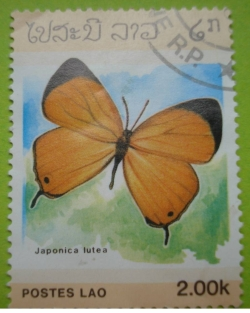 Image #1 of 2.00 Kip - japonica lutea