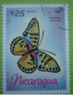 Image #1 of 25 Cordobas - euphaedro cyparissa