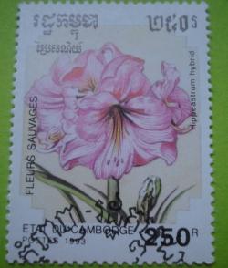 Imaginea #1 a 250 Riels - Hippeasrum hybrid