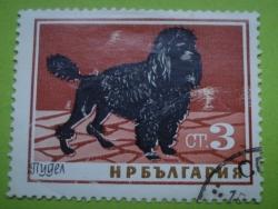 Image #1 of 3 Stotinki - Poodle