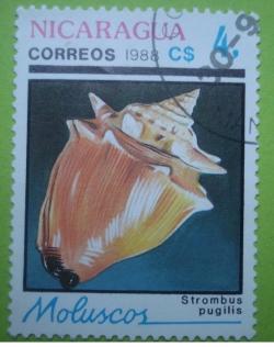 Image #1 of 4 Cordobas - strombus pugilis