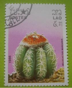 Image #1 of 5 Kip - melocactus manzanus