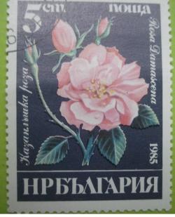 Imaginea #1 a 5 Stotinki - Rosa damascena